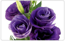 20+ Purple Shades Lisianthus Flower Seeds   / Long Lasting Annual