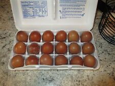 12 + Black Copper Maran Fertile Hatching Eggs