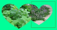 LEMON BALM & Thyme TEA (10) ORGANIC HERBAL Teabags boost immune system naturally