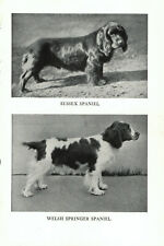 1947 Complete Dog - Sussex Spaniel and Welsh Springer Spaniel on one side and.