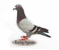 Racing Pigeon Windows Sticker - x6 stickers - Pigeon Fanciers