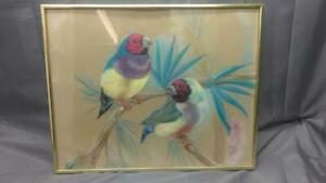 Vintage Original Pastel Painting Drawing Australian Golden Finch Finches Birds