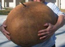 20 Graines New Giant Bushel Gourd , Lagenaria siceraria seeds
