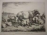 Johann Adam KLEIN 1792-1875 Gravure EAU FORTE ORIGINALE MOUTONS ANIMAUX 1816