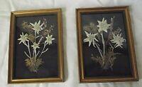 Deux jolis  petits tableaux anciens  Edelweiss
