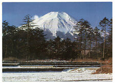 JAPAN = RP, Pine Forest, at the foot of Mt. Fuji. c.1980. Unused.