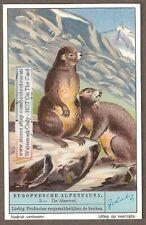 Birds And Mammals Of European Alps  6 Nice c80 Y/O Trade Ad  Cards