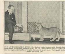 1936 Mr Godfrey Locker Lampson With A Lion Cub In Drawing-room