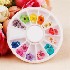 Fashion 12 Colors Dried Dry Flower Nail Art Decorations for UV Gel Acrylic Tips