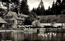 Horn in Lippe s/w AK ~1950/60 Partie an der Silbermühle Teich Enten Biergarten