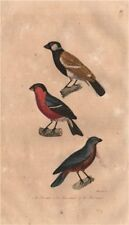 BIRDS. Bouvrel; Bouvreuil (Bullfinch); Bec Rond (Blue Grosbeak). BUFFON 1837