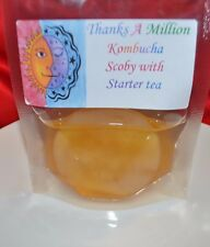 "Lot of 2 x 3"" in Kombucha Scoby Culture Made with Organic Tea and Sugar"