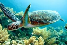 SUPERB SWIMMING SEA TURTLE CANVAS #4 QUALITY FRAMED SEA LIFE PICTURE WALL ART