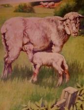 Vintage Sheep and Lamb Print 1939 Children's Book Illustration Victor Becker
