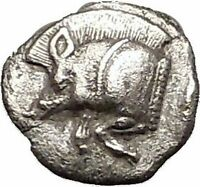 KYZIKOS in MYSIA 480BC Boar Lion Tuny Fish Ancient Silver Greek Coin i57597