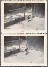 Vintage Snapshot Photos Pet Pit Bull Dog on Leash 701319