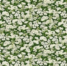 White Floral Grandma's Garden Naturescapes Northcott Fabric 1/2 Yard