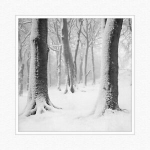 """Fine Art Print 12x12inch """"Winter Trees"""" titled and signed"""