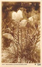 Glacier National Park 1930-40s RPPC Real Photo Postcard Bear Grass
