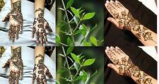 Henna Plant 50+ Seeds (Lawsonia Inermis,Tattoo & Hair Dye Plant)- Very Rare...