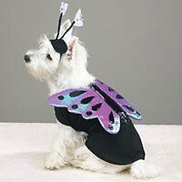 Casual Canine FLUTTER PUP BUTTERFLY Pet Halloween Costume XS S M L XL