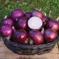 Red Onion Burgundy Organic Vegetable 1000 Seeds NON GMO Heirloom Garden Farms