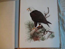 VINTAGE BALD and GOLDEN EAGLE Wildlife ART bird  PRINTS by ROGER TORY PETERSON