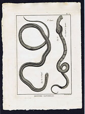 Cobra & Knitted-Le Raye -Le Serpent a lunettes Panckoucke Snakes 1789