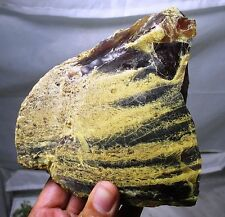 Huge 428 gram fossil Amber - Indonesia/Sumatran - Miocene age