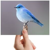 "Mountain Blue Bird Twitcher Small Photograph 6"" x 4"" Art Print Photo Gift #12618"