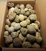 15 Keokuk Unopened whole Geodes (ranging from .25in up to 2.75in in diameter)
