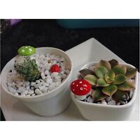50pcs Garden Miniature Mushroom Bonsai Craft Garden Ornament For Plant Pot Fairy