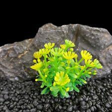 Artificial Green Seaweed Water Plants Plastic Fish Tank Aquarium Decoration DIY