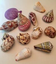 300g Netted Bag Real Sea Shells ~ Nautical Home Decor Crafts Shell Fish Aquarium