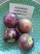 Tomatillo Ungarischer lila Schleier - Hungarian Purple Veil 40+ Samen - Seeds