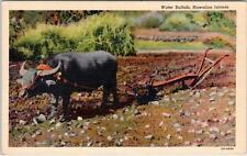 Hawaii Water Buffalo in Field 1944 Linen Postcard
