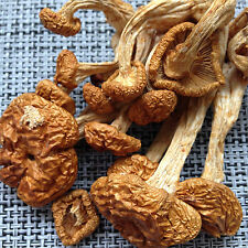 Wild Wood Wooden Magic Mushrooms Dehydrated Edible Pholiota Nameko 500g