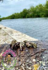 Turbo caracoles marinos Limpiar Redondo