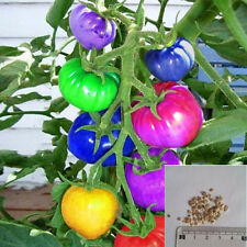 100Pcs Rainbow Tomato Seeds Colorful Bonsai Organic Vegetables Seed Home Garden
