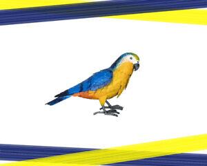Blue & Yellow Macaw Parrot Medium Cute Animal Metal Garden Decor Ornament