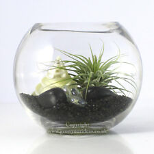 Air plant Kit in glass Terrarium With black and white theme | kit3