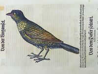 Conrad Gesner; BLACKBIRD hand coloured woodcut FOLIO FIRST EDITION 1557