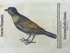Conrad Gesner; BLACKBIRD hand coloured woodcut FOLIO FIRST EDITION 1557