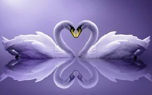 """Purple Swans in Love Heart Peace Calm 16""""x20"""" Canvas Picture Art Print Reflect"""