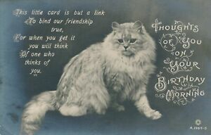 BIRTHDAY - Cat Thoughts Of You On Your Birthday Morning Real Photo Postcard rppc