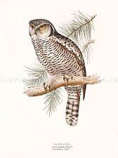 PITTURA UCCELLI Gould HAWK OWL art print poster lah529a