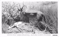 1940s San Francisco California Taxidermy Cheetah Academy RPPC postcard 748