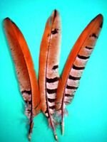 "10 Pcs REEVES PHEASANT Natural Feathers 4-10"" Craft/Pad"