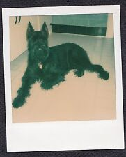 Vintage Polaroid Photograph Beautiful Black Puppy Dog Laying on Kitchen Floor