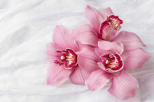 STUNNING PINK ORCHID FLOWERS CANVAS #813 QUALITY FLORAL PICTURE A1 WALL ART